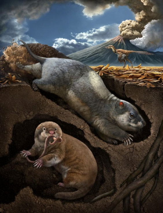 An artist's rendition of the two newly discovered mammaliamorph fossils. Credit: Chuang Zhao